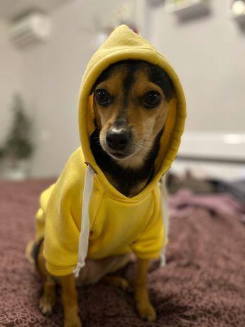 Худи одежда на собаку