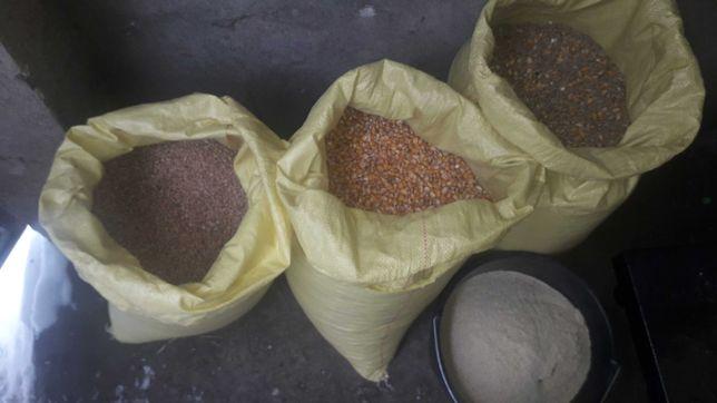 Pszenica groch jęczmień kukurydza