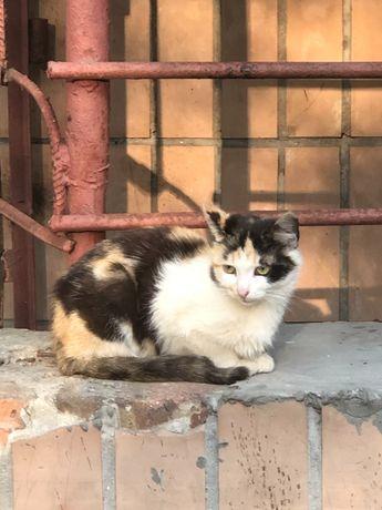 Кішки шукають дім