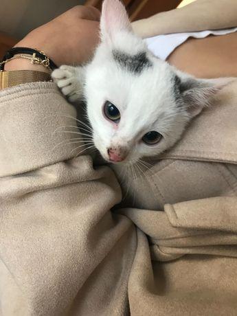Oddam dzikie koty