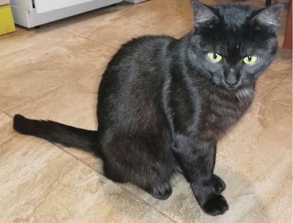 кішка стерилізована чорна віддам в добрі руки