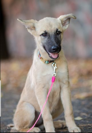 Подрощенный щенок, мальчик Лакки, доставка бесплатно из приюта. Привит