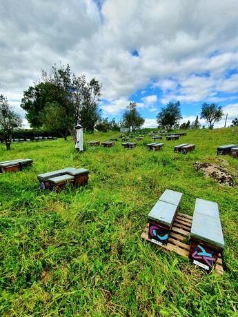 Enxames de abelhas ibéricas desde 50€