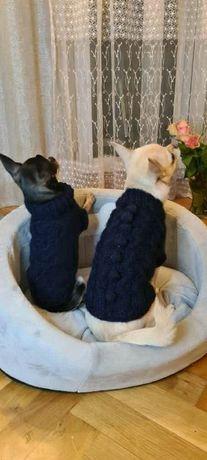 Śliczne sweterki dla kotków i piesków.