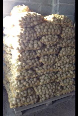 Ziemniaki kaliber sadzeniak Owacja Vineta Bellaroza