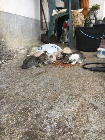5 gatinhos lindos, Podentes-Rua da Carreira,54, adopção urgente