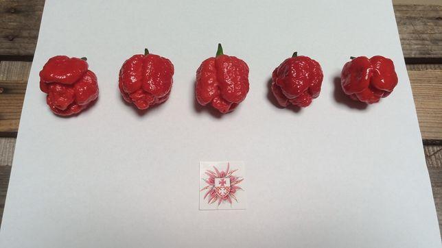 Hurtowe ilości, nasiona ostra papryka, Carolina Reaper Scorpion i inne