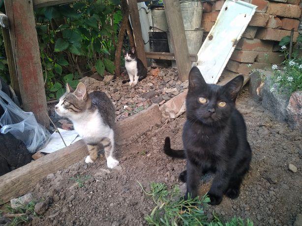 Ищем хозяев для котят