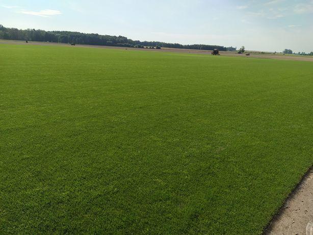Trawa rolowana trawnik z rolki w rolce ogród darń
