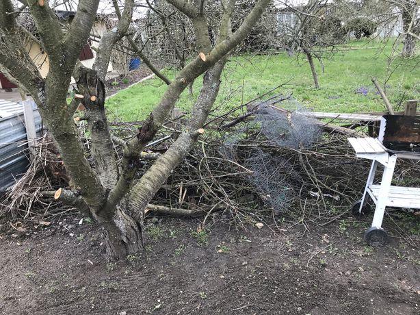 Oddam gałęzie na opał