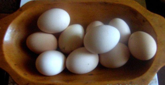 Jajka wiejskie od kur z wolnego wybiegu