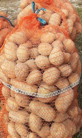 Ziemniaki prosto z pola! 1zł/kg
