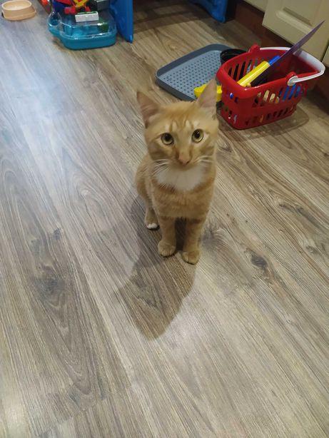 Кот рыжий по кличке Митя.