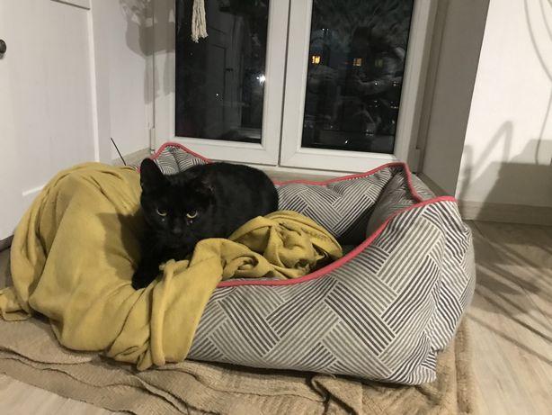 Młoda czarna kotka Negra do adopcji