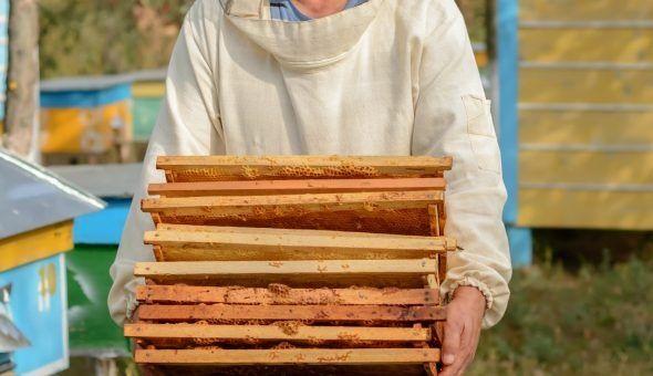 Сушь пчелиная 230мм.