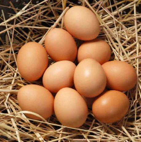 Jajka wiejskie !!