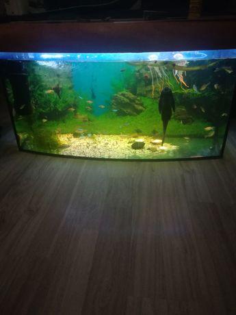 Akwarium 200l z oświetleniem led