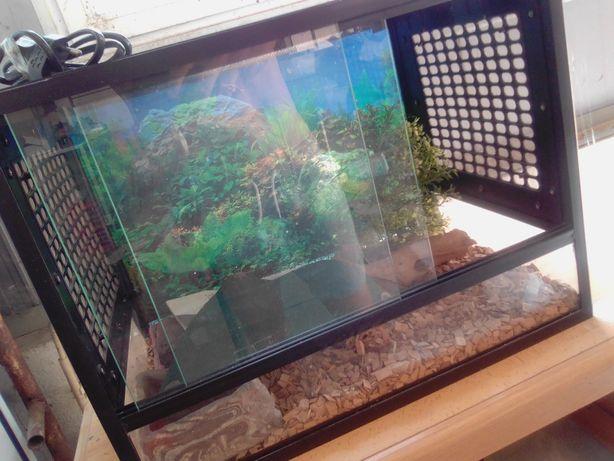 Répteis aquário novo