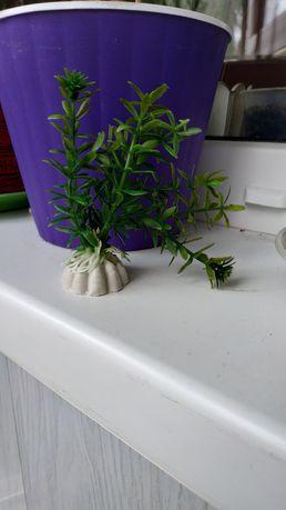 Акваріумний декор рослини для акваріума декоративні