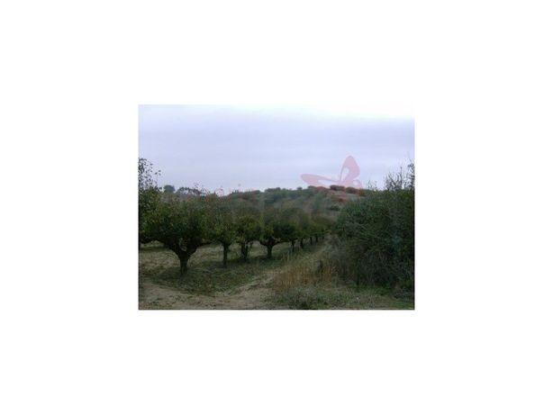 Terreno agrícola com 6.960m2 com pomar de maceiras e pere...
