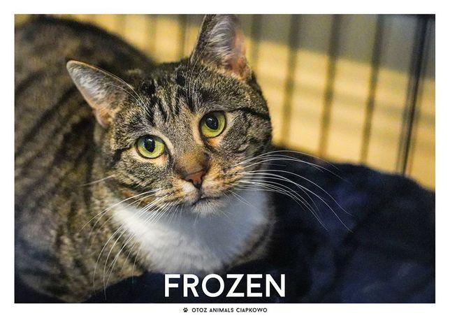 Piękna Frozen czeka na dom w OTOZ Animals Schronisku Ciapkowo.