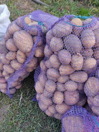 Крупная картошка большой картофель Королева Анна