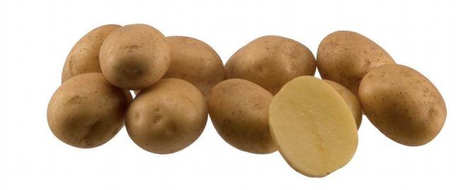 Ziemniaki jadalne madeleine pod nadzorem