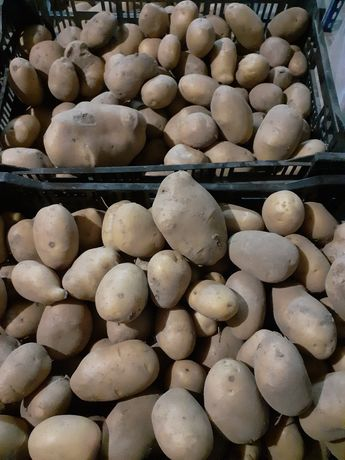Vendo Batatas AGRIA