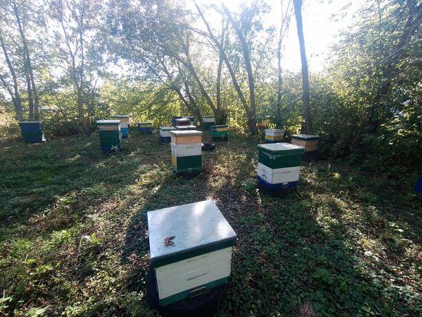 Бджолосім,ї, пасіка, вулики, бджоли
