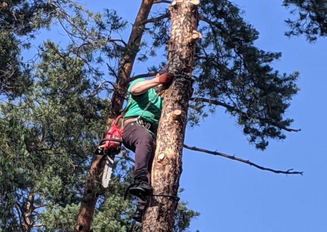 Удаление (спил) деревьев, обрезка, чистка кроны, обработка, лечение