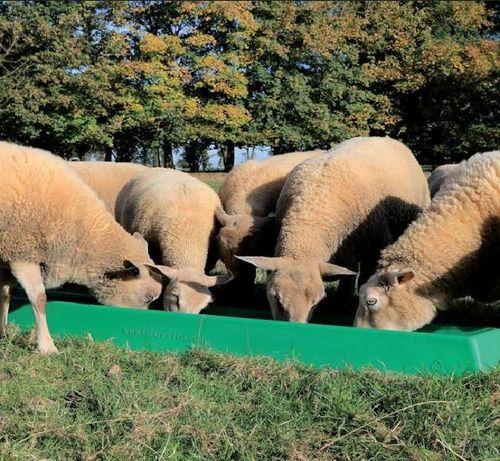 Koryto dla owiec i kóz, 1 m