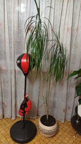 Комнатное растение Дроцена