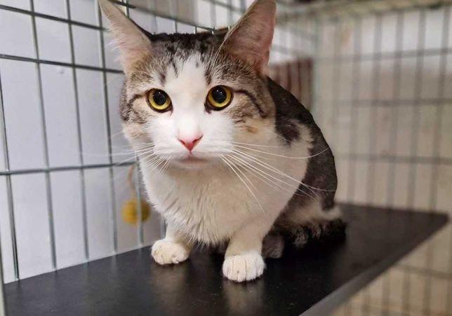 Красавец-кот Красавчик, котик 1г, кастрирован