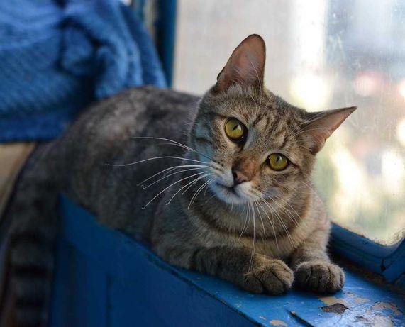 молодесенький котичок полосатий муркотик 1р
