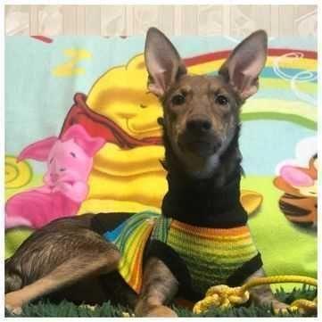 Дружелюбный ласковый щенок в поисках дома, Злата, 5 месяцев