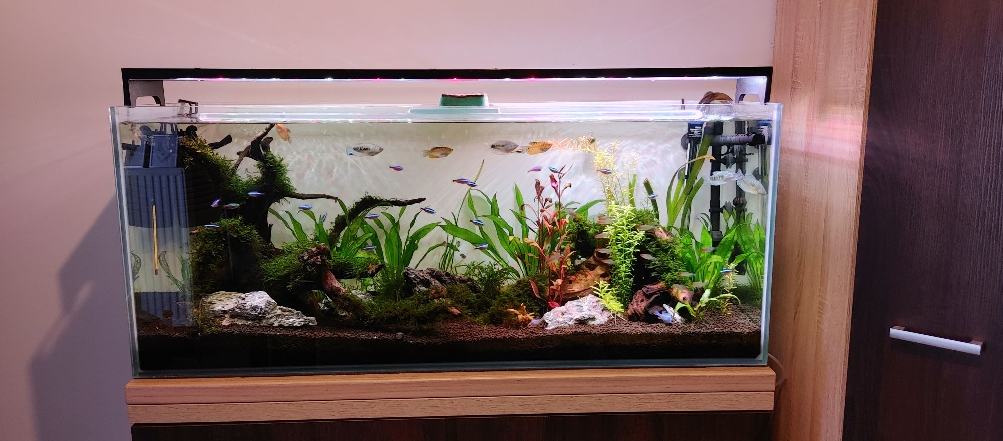 Akwarium 240l , lampa 100w, filtr RO, BUTLA CO2. Filtr kubełkowy aquel