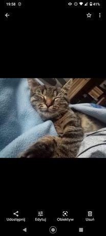 Zagineła kotka kotka