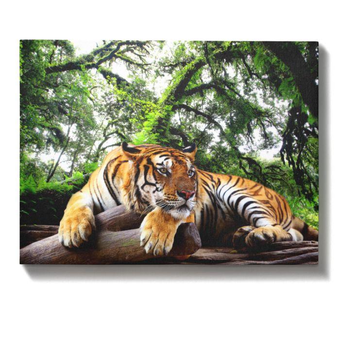 Obraz na płótnie wzór: tygrys, dżungla 60x40 cm Piaseczno - image 1
