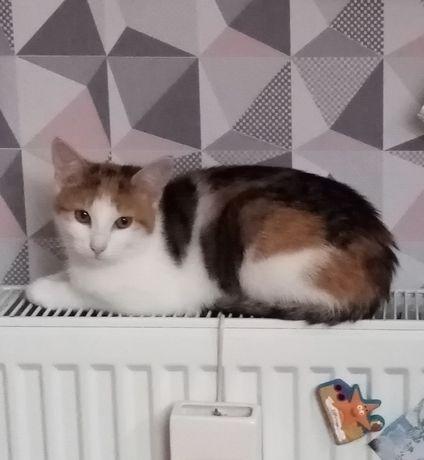Zaginęła kotka     .
