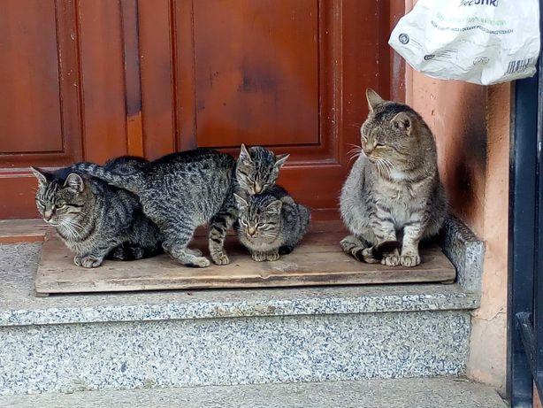 """Kotki bardzo łowne 2 dziewczynki """"podejmą pracę"""", najchętniej na wsi."""