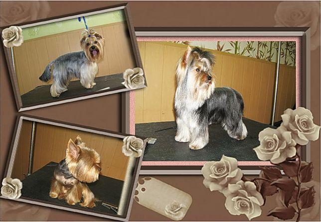 Мариуполь! Стрижка, тримминг собак!