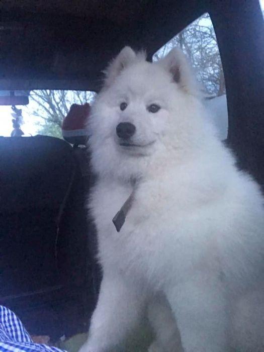 my dog lost Винница - изображение 1