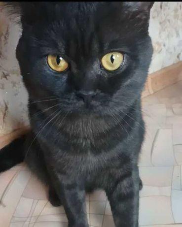 Пропал черный кот