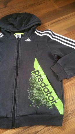 Bluza chłopięca Adidas Predator r. 146
