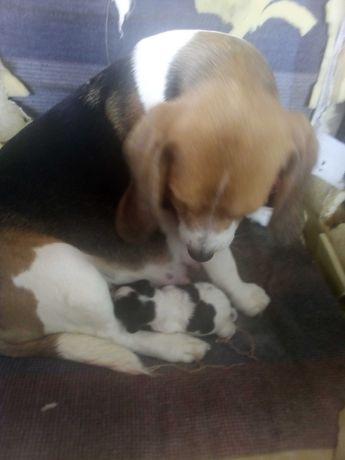 Cães bebes recém nascidos