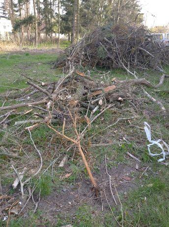 Drzewo Gałęzie za darmo