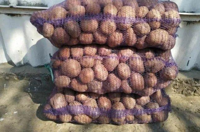 Продам домашнюю картошку, доставка домой Киев