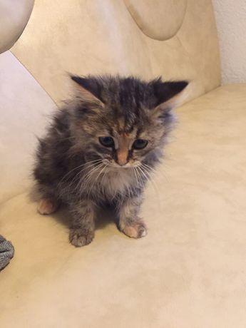 Котик кошечка бесплатно