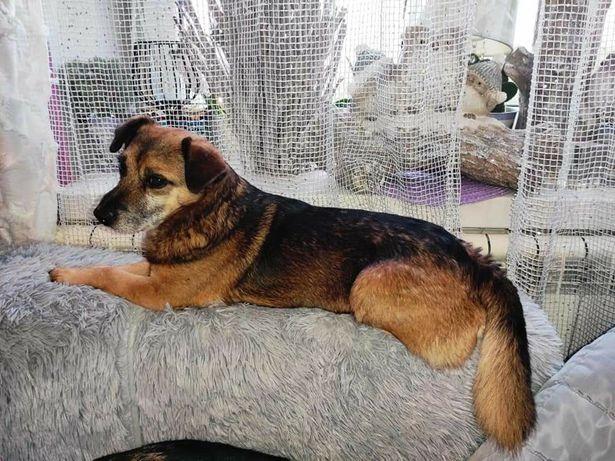 Psiak idealny na łóżko do adopcji
