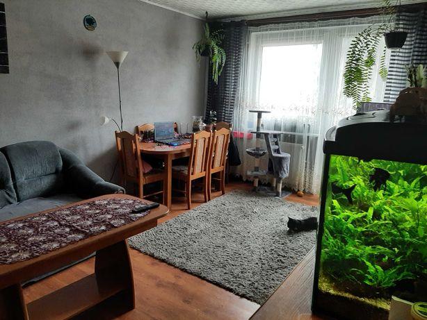 Wynajmę mieszkanie 65m2 Barczewo